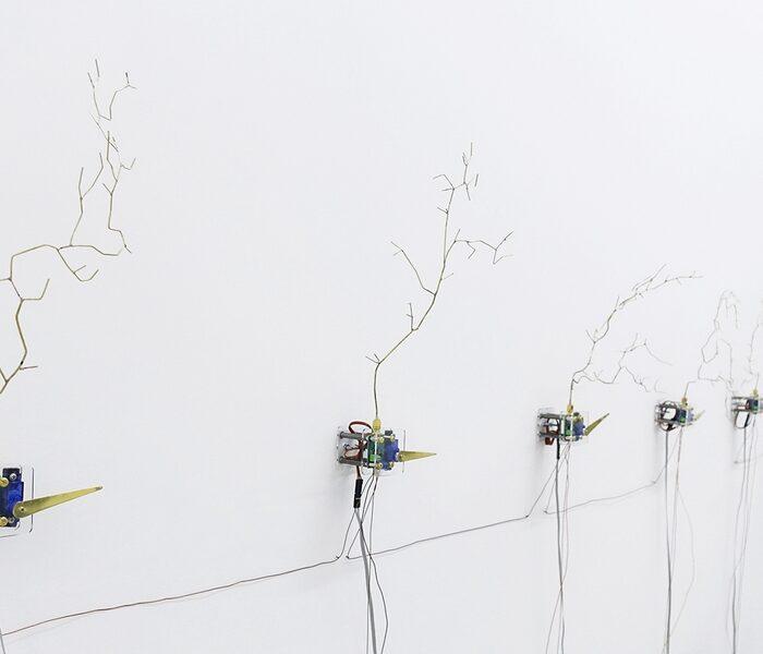 Retour sur l'exposition «L'hectare et la grenouille», avec la participation de Raphaëlle Kerbrat